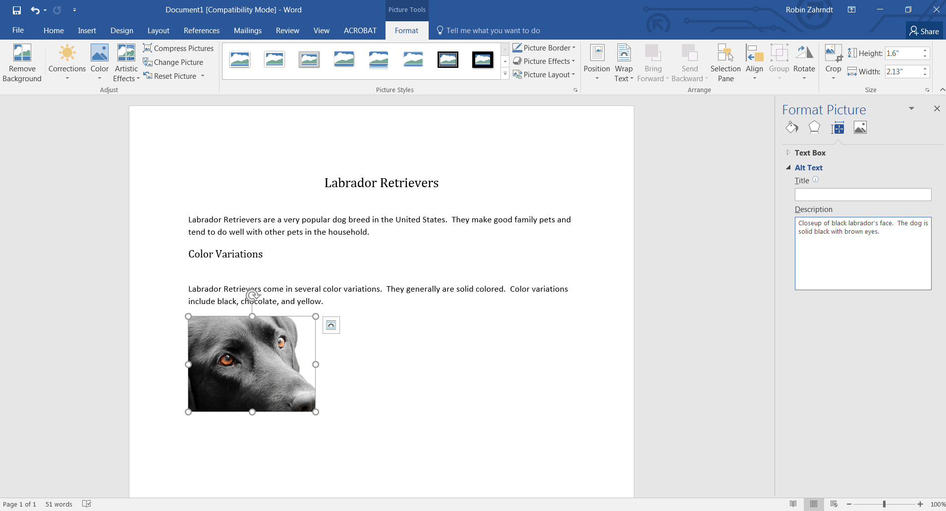 Screenshot of a Microsft Word document about Labrador Retrievers. In the document, the author has written alternative text for an image of a Labrador Retriever.