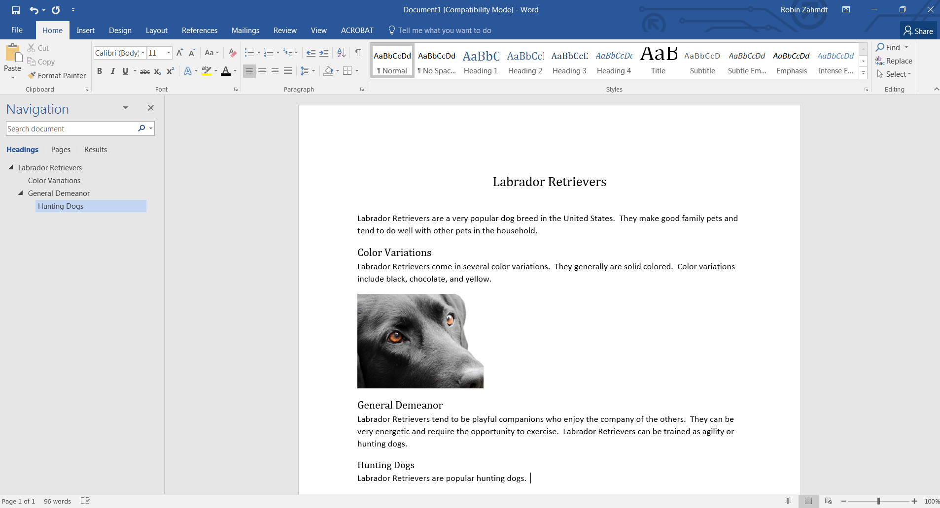 Screenshot of a Microsoft Word document on Labrador Retrievers. The document uses headings in a sequential order to organize content.